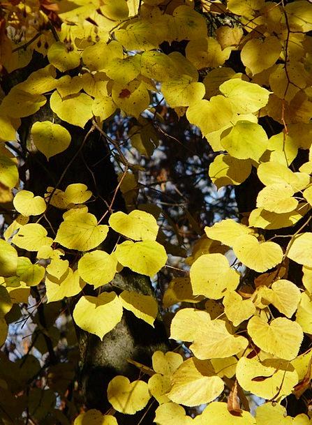 Lipovina Landscapes Nature Tilia Linde Forest Wint