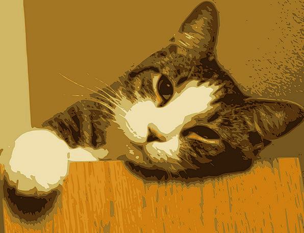 Cat National Feline Catlike Domestic Friends Kitty