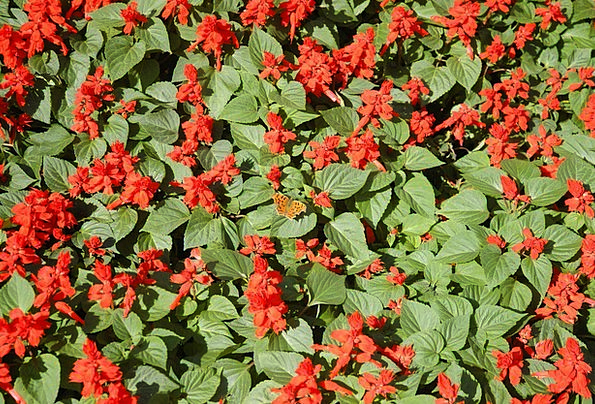 Flower Bed Bloodshot Floral Flowery Red Stem Plant