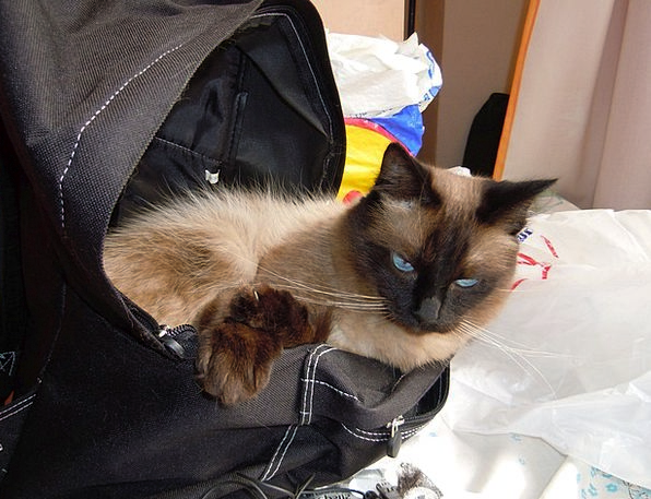 Cat Basket Pet Domesticated Bag Funny Domestic Nat