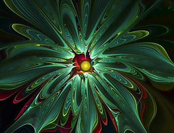 Apophysis Flower Floret Fractal Abstract Nonconcre