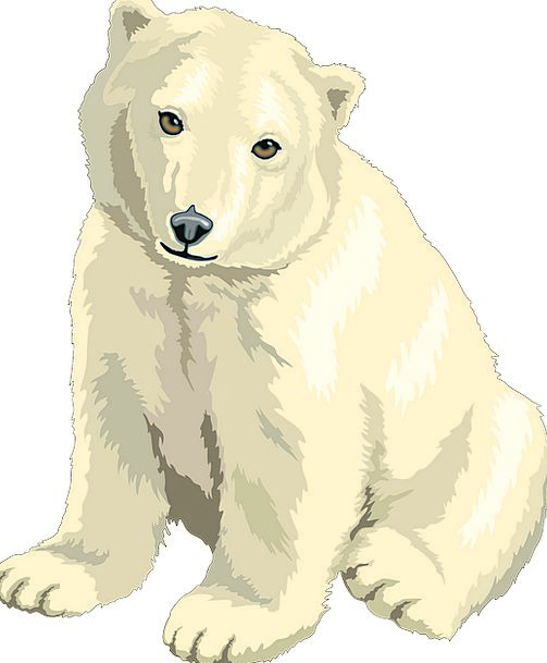 Polar Glacial Tolerate Baby Darling Bear Cub White
