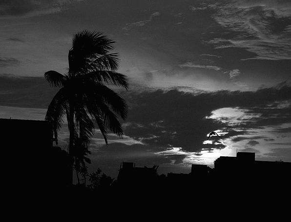 Storm Tempest Vapors Dark Dim Clouds Coconut Tree
