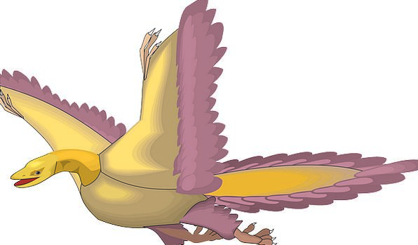 Bird Fowl Hovering Wings Annexes Flying Ancient An