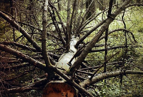 Waldsterben Landscapes Nature Gnarled Knotted Dead