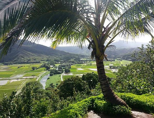 Hanalei Kauai Hawaii Kauai Palm Tree Princeville H