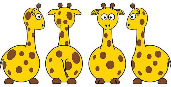 Giraffes Creatures Animals Faunae Mammals Differen