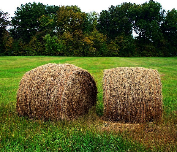 Hay Drink Securities Food Round Bales Bails Countr