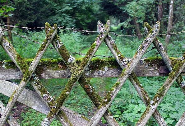 Wood Fence Barrier Battens Boards Fence Weave Limi
