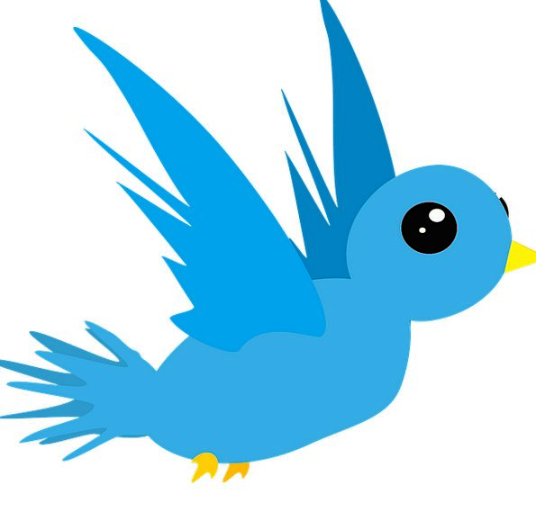 Bird Fowl Physical Blue Azure Animal Fly Hover