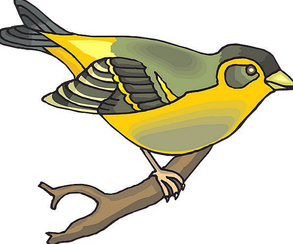 Bird Fowl Division Wings Annexes Branch Beak Bill