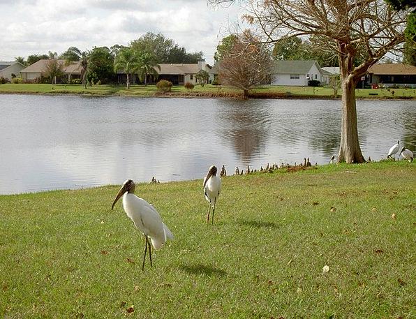 Egret Landscapes Freshwater Nature Water Aquatic L