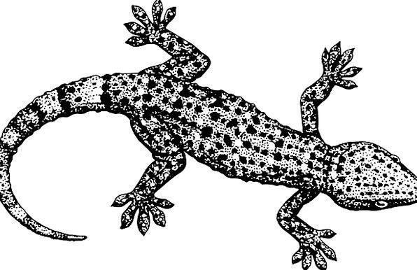 Gecko End Reptile Tail Crawling Swarming Lizard Re