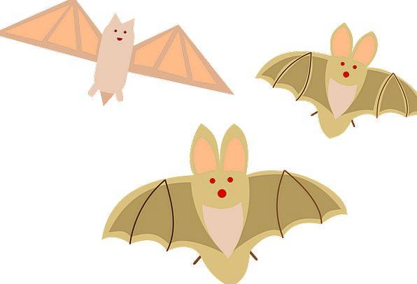 Halloween Rackets Birds Natures Bats Horror Mammal
