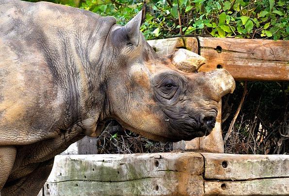 Rhino Menagerie Skull Mind Zoo Mammals Creatures