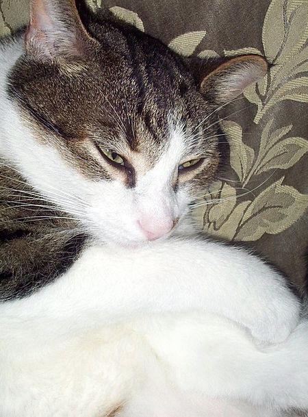 Cat Asleep Bed Divan Sleeping Kitty Animal Physica