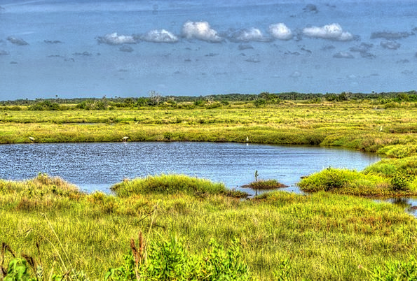 Cape Canaveral Marsh Lake Freshwater Swamp Water A