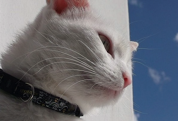 Cat Feline Physical View Opinion Animal Nature Cou