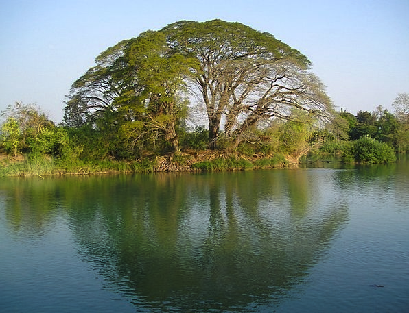 Laos Sapling Water Aquatic Tree Reflection Likenes