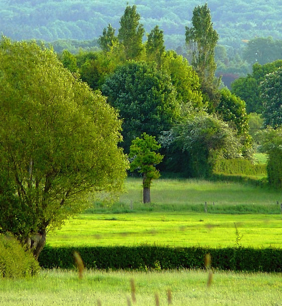 Trees Plants Landscapes Field Nature Reported Stat