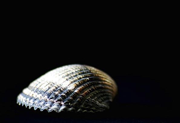 Shell Bomb Near Water Creature Close Sea Animals F