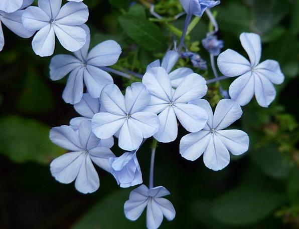 Flowers Plants Landscapes Floret Nature Light Blue