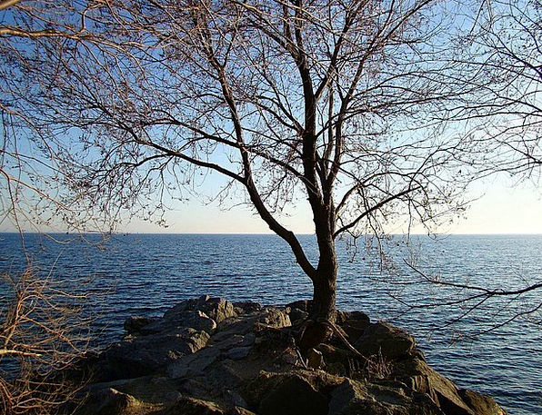 Lake Freshwater Aquatic Wave Upsurge Water Tree Sa