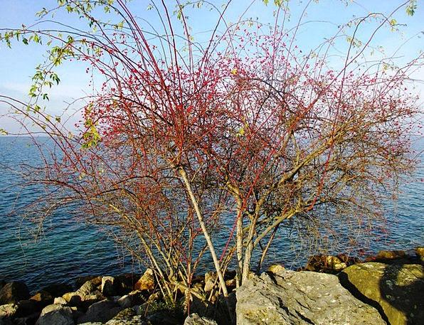 Wild Rose Landscapes Lovely Nature Rose Hip Beauti