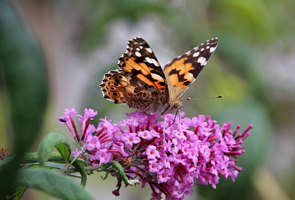 Butterfly Physical Insect Bug Animal Nature Countr