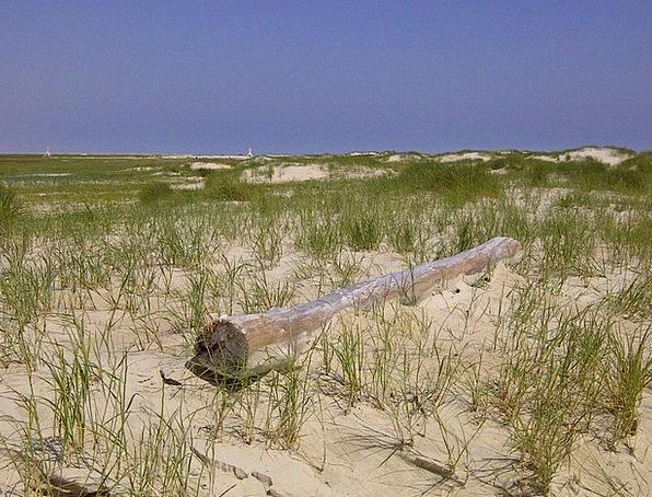 Flotsam Debris Vacation Bank Travel Beach Seashore