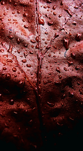 Red Bloodshot Landscapes Nature Water Aquatic Leaf
