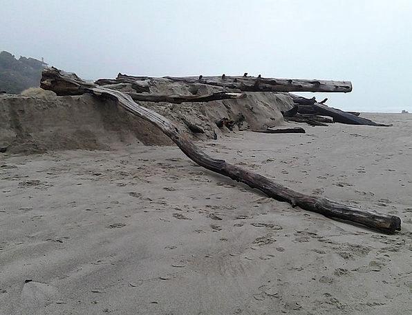 Driftwood Flotsam Vacation Woods Travel Beach Seas