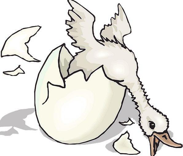 Baby Darling Fowl Duck Stoop Bird Egg Ovum Free Ve