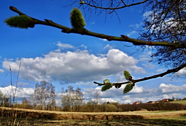 Spring Coil Landscapes Nature Signs Of Spring Mess