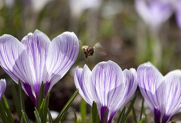 Spring Coil Landscapes Nature Schwertliliengewaech