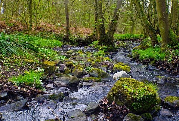 Spring Coil Landscapes Lovely Nature Warm Sincere