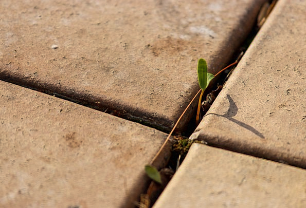 Paving Flagging Textures Sprout Backgrounds Cross