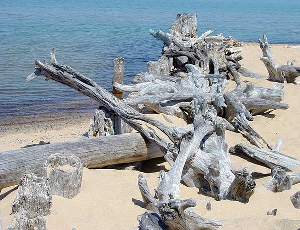 Driftwood Flotsam Vacation Travel Beach Seashore L