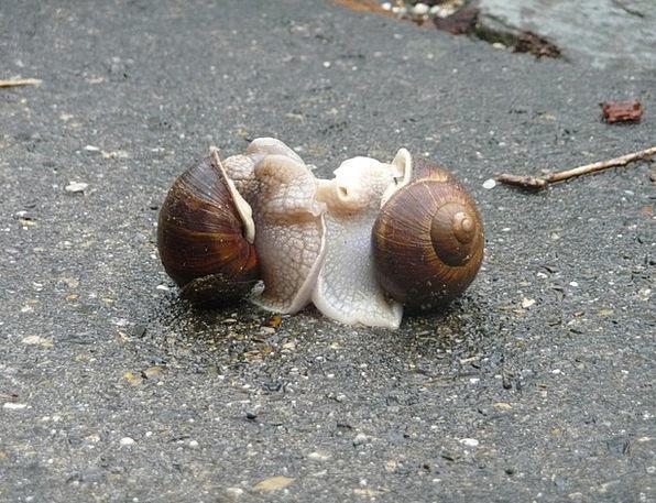Escargots Pairing Combination Snails Slow Sluggish