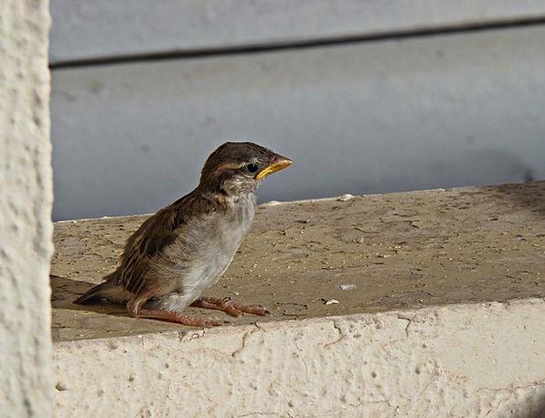 Sparrow Fowl Little Bird Bird Fly Hover Freedom Wi