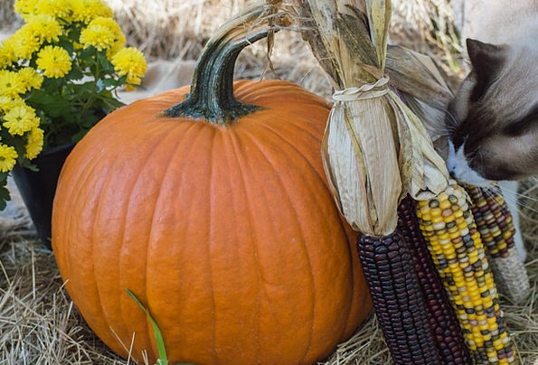 Pumpkin Fall Reduction Autumn Orange Carroty Seaso