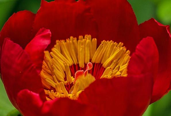 Flower Floret Red Bloodshot Red Flower Flora Veget