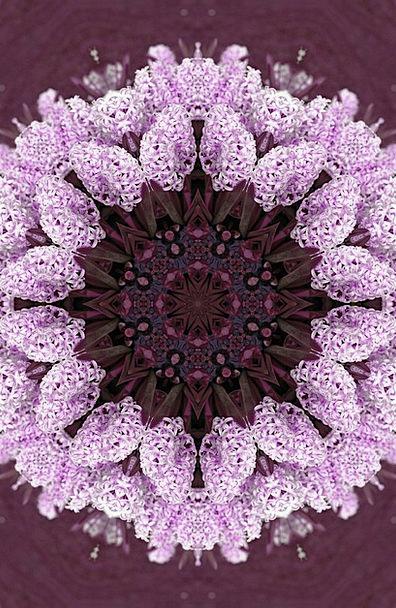 Flower Floret Textures Backgrounds Garden Plot Hya