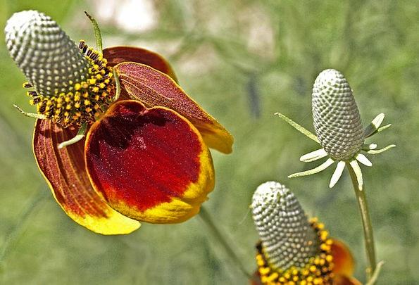 Flower Floret Landscapes Vegetable Nature Nature C