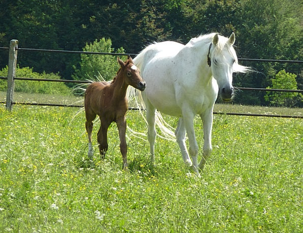 Horse Mount Landscapes Nature Colt Mare Outside Me