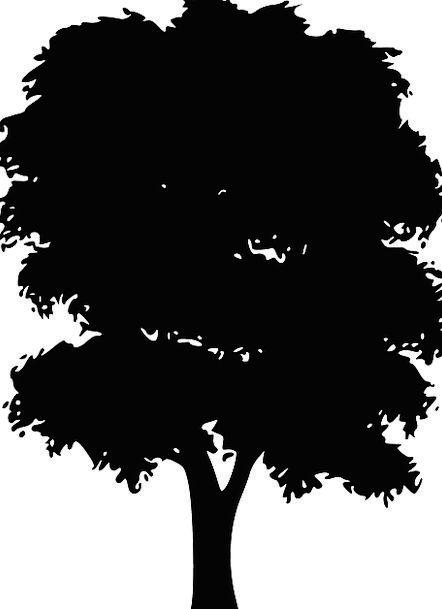 Silhouette Outline Sapling Black Dark Tree Free Ve