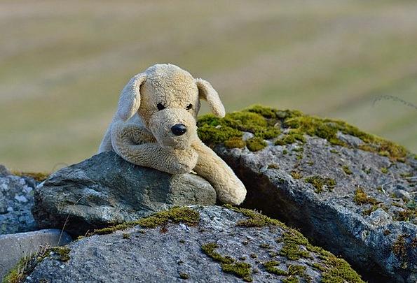 Plush Dog Teddy Soft Toy Teddy Bear Soft Lenient