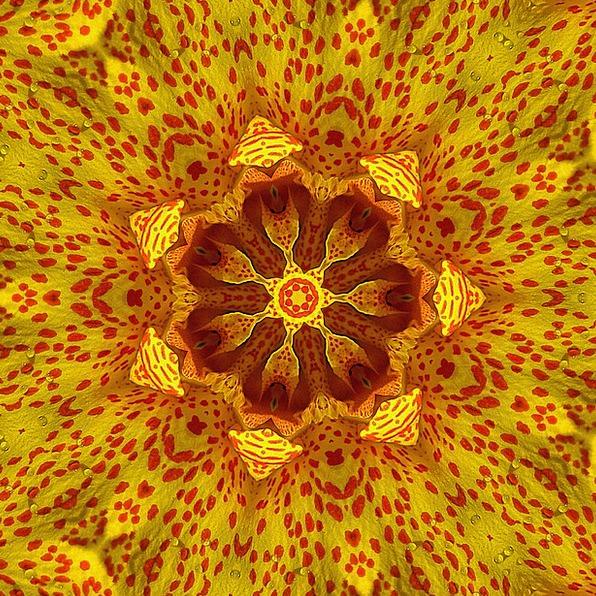 Kaleidoscope Phantasmagoria Textures Image Backgro