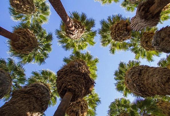 Palm Tribute Landscapes Sapling Nature Leaf Foliag