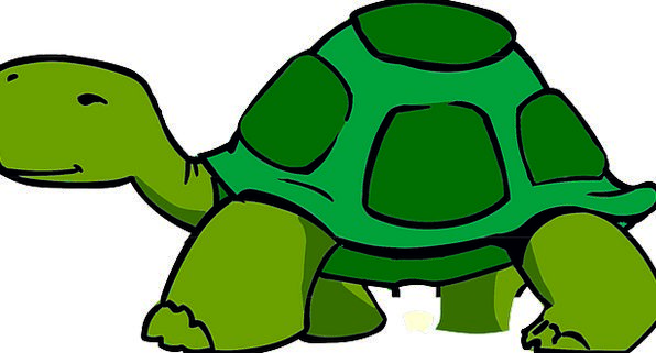 Turtle Covering Tortoise Carapace Wildlife Green L